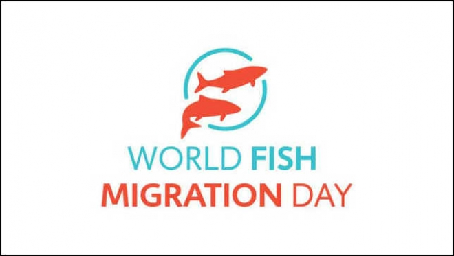World Fish Migration Day in Italia